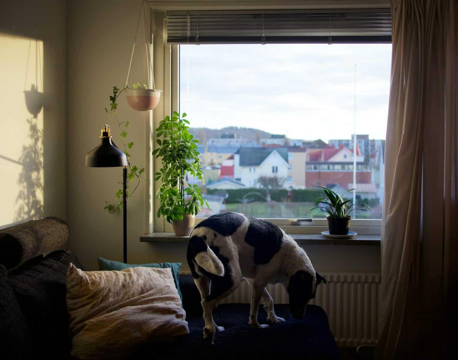 דירה - בקשה משכנתא